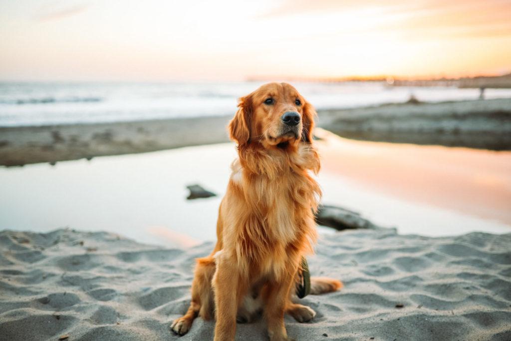 Entspannt reisen mit Hund